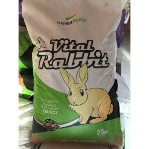vital rabbit