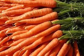 wortel pakan kelinci