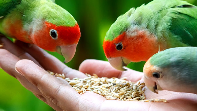 makanan burung
